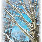 Snow Covered Holiday by MSRowe Art and Design