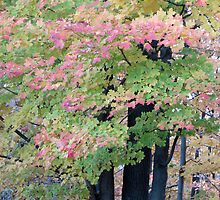 Pink Leaves by Kathie McCurdy
