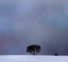 Good Evening by Angelika  Vogel