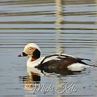 Long tailed duck by weecritter