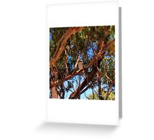 Middle Head Reserve 19.12.13 Greeting Card