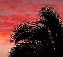 Tropical Silhouette 1 by Ellen Cotton