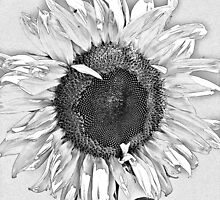 Sunflower Art by ArtChick