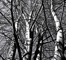 Trees BW by ArtChick