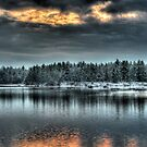 March Pond Evergreens by Carrie Blackwood