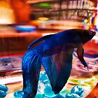 Siamese Fighting Fish 2 by Dawn Eshelman