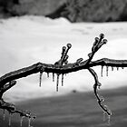 Iced Over by katpix