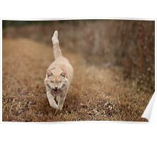 Gumbo on Brown Grass Poster