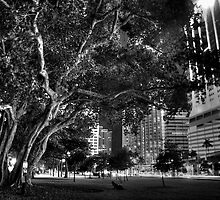 City Tree by njordphoto