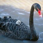 Mother Love at Laurimar Lake  by Pauline Tims