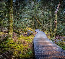 Enchanted Walk by Russell Charters