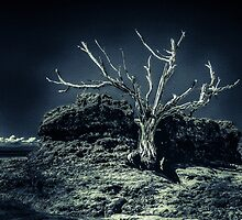 Murrays Tree by Les Boucher