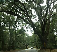 The life is in the Trees of Charleston. by Ragen Gee
