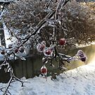 Ice Cherries & Bushes by Marie Van Schie