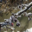 Ice Cherries Branch by Marie Van Schie