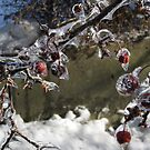 Ice Cherries Bough by Marie Van Schie