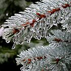 Frozen Evergreen by Pamela Burger