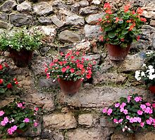 assorted flowers on stone wall by kaye terrelonge