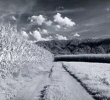 Corn fields and mountains Alpine rural landscape on black and white infrared film fine art wall art - I campi di casa by visionitaliane