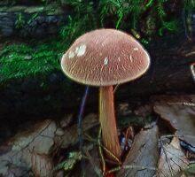 Fractalius Fungi by vigor