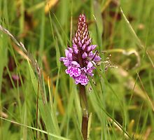 Spotted orchid. by Elisabeth Thorn