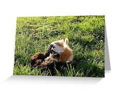 Game of happy cats Greeting Card