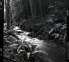 Black and white medium format creek in the forest wall art - Bianco e Nero d'un tempo by visionitaliane
