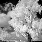 Infrared 7 by BKSPicture
