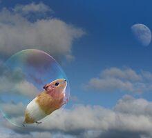 Dream a little dream by Matt West