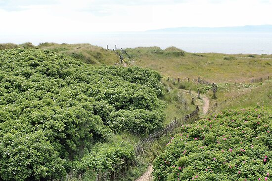 Path to Stevenston Beach by missmoneypenny