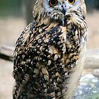 Eagle Owl by Hannah Welbourn