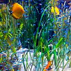 Tropical fish Discus and Neons by Martyn Franklin