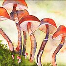 Mushrooms by Sally Griffin