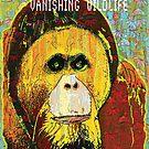 Orangutang by Dick  Iacovello