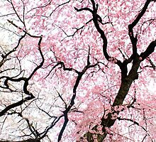 Dancing Cherry Blossom Trees by vickisee