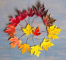 Maple leaf colourwheel by Zoe Power