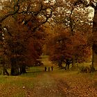An Autumn Walk by WillBov