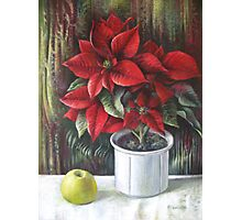 Christmas colors  Photographic Print
