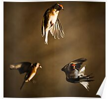 Goldfinch Trio. Poster