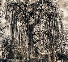 HDR grunge tree by MalteWiggers