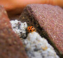 Ladybird by anavi1990