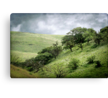 The Green, Green Hills of Home Canvas Print