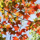 Autumn Glow by Johanne Brunet