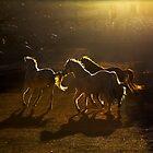 Light play in the Country of Beautiful Horses by Baki Karacay