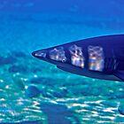Sharks in Captivitiy by Ersu Yuceturk