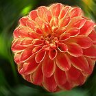 Dahlia - orange by Evelyn Laeschke