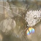 Spider Web of Pearls by Remo Savisaar