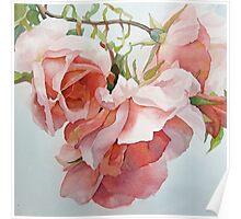 Climbing Roses Poster