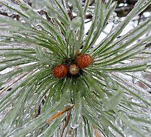 Frozen Pine Cones  by Rich Fletcher