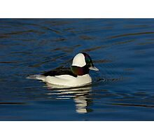 Gorgeous Bufflehead Lake Atlanta, Rogers, Arkansas Photographic Print
